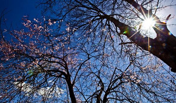 林芝的桃花向着蓝天,雪山盛开!辣么美!辣么美!辣么美!